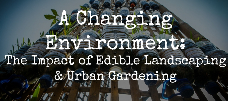 A Changing Environment: The Impact of Edible Landscaping & Urban Gardening