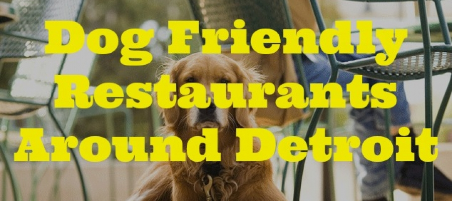 Dog Friendly Restaurants Around Detroit