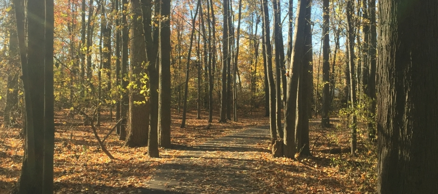 Trees & Trails; An Urban Hike in South Oakland County