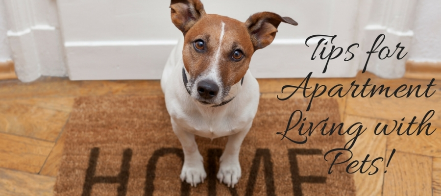 Tips For Apartment Living With Pets