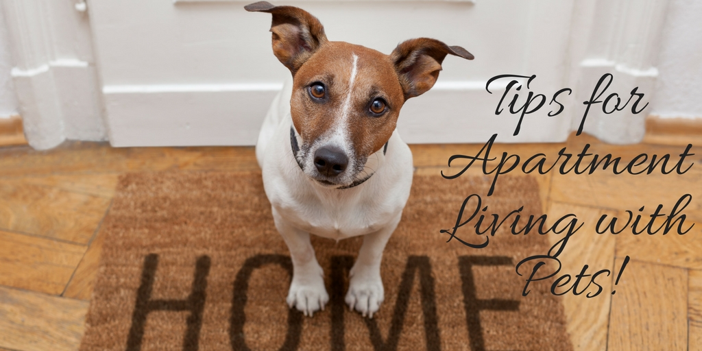 Tips-for-Apartment-Living-with-Pets